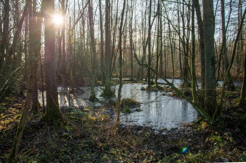 Solingen, Ohligser Heide, Viehbach