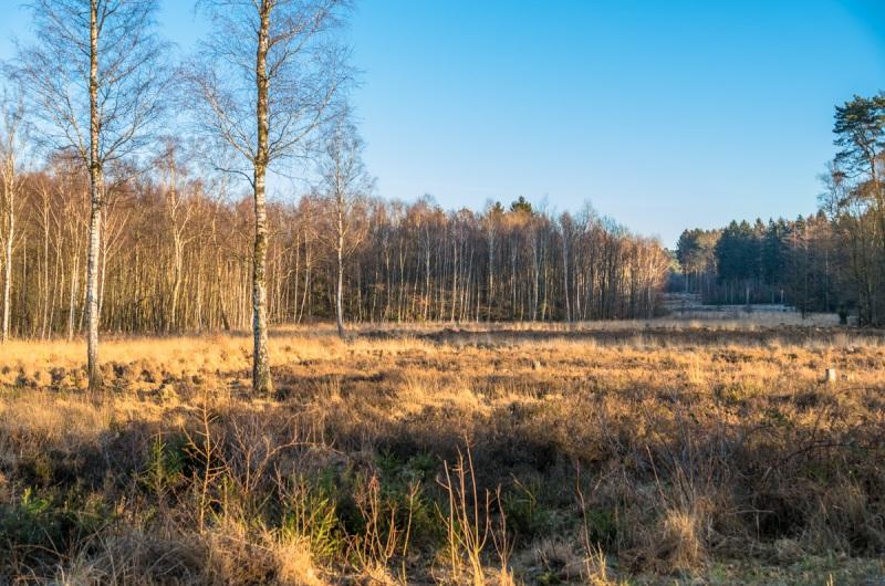 Oligser Heide, Solingen